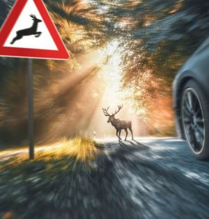 animals-on-the-road